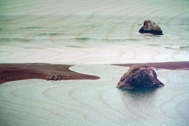 Wood panel photographs by Vicki Rulli & Tom Heaphy